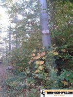 trimm-dich-pfad-sternwald-15
