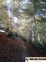 sternwald-trimm-dich-pfad-22