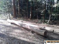 trimm-dich-pfad-sternwald-6