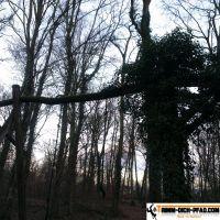 trimm-dich-pfad-mooswald-seehau-10