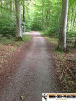 waldsportpfad_dietlingen_13
