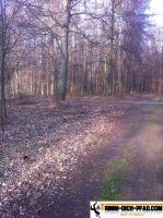 Trimm-Dich-Pfad-Altenburg12
