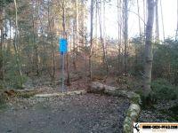 trimmd-ich-pfad-gruenwald-46