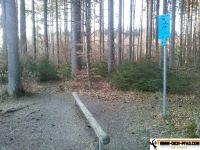 trimmd-ich-pfad-gruenwald-20