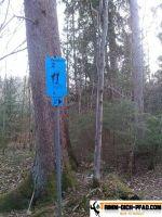 trimmd-ich-pfad-gruenwald-35