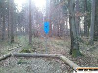 trimmd-ich-pfad-gruenwald-38