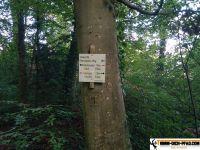 wald-sport-pfad_goeppingen_wien_09