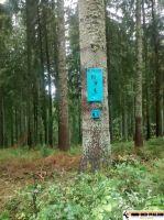 trimm-dich-pfad_furtwangen_24