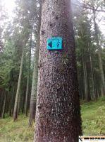 trimm-dich-pfad_furtwangen_11