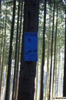 waldsportpark-ebersberg56